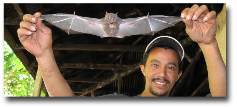 Attic-bat