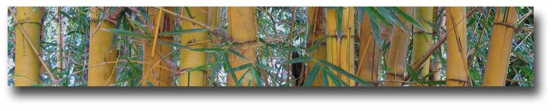 Bamboo-banner-3