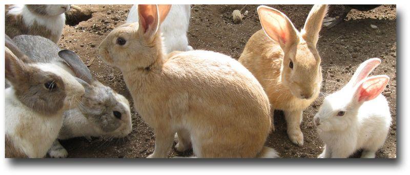 Rabbits24