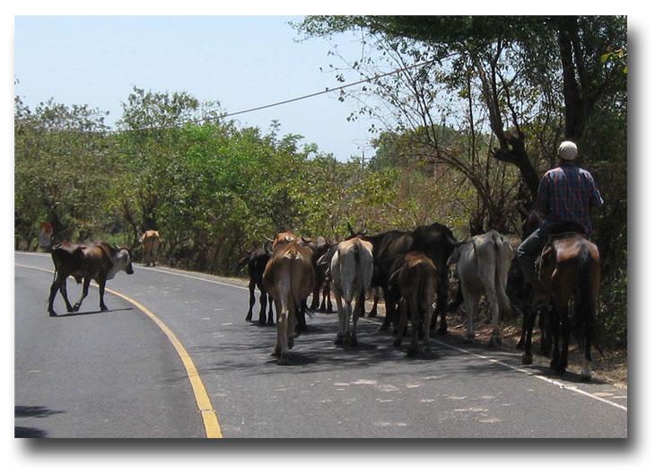 Road-hazards1
