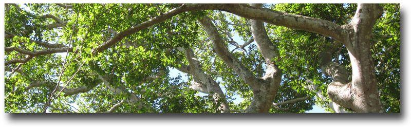 Santa-Nita-tree