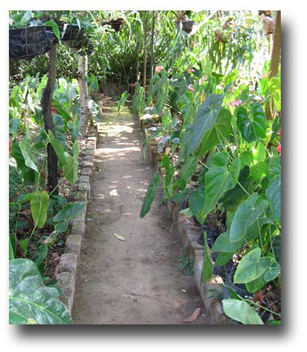 Cartagenga-nursery