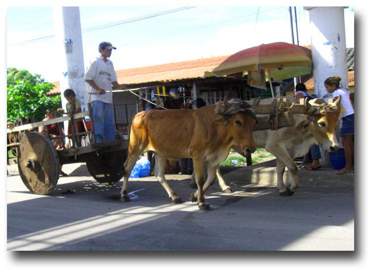 Ox-cart-234