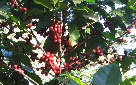 Harvest-2009-3